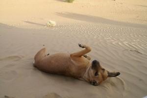 canespiaggia_02