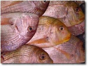 """Sono tutti pesci """"dentici""""... tutti uguali... i-dentici"""